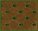 Grass Plug Planting Pattern