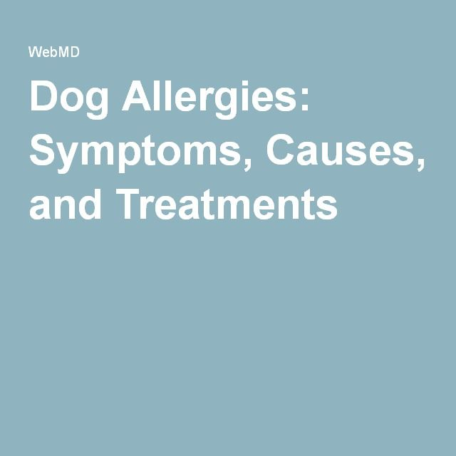 Dog Allergies: Symptoms, Causes, and Treatments