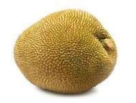 NangkaNangka Nangka Nangka – ook wel jackfruit genoemd – is familie van de broodvrucht. Alleen kan de nangka nog veel groter worden. De geelgroene, langwerpige vrucht kan wel een meter lang worden en h ...