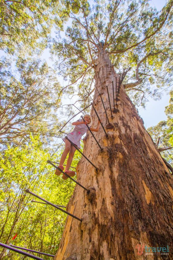 Would you like to climb a 60 meter high tree? then visit the Gloucester Tree in Western Australia