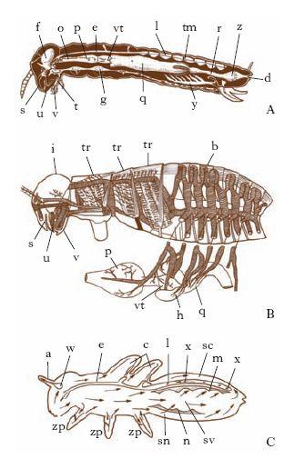 Risultati immagini per ultimo stadi della vita di un insetto