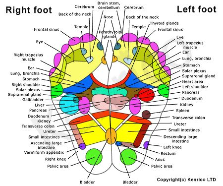 25+ best foot massage diagram ideas on pinterest | reflexology, Human Body