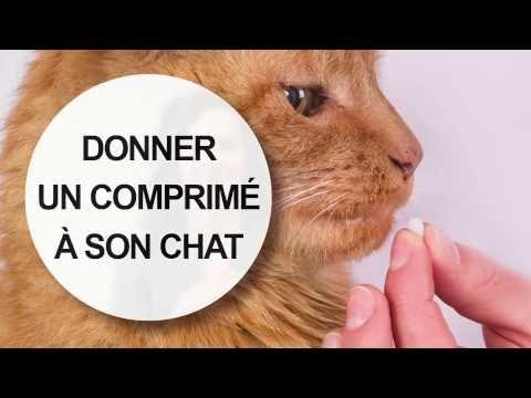 Donner un comprimé à son chat