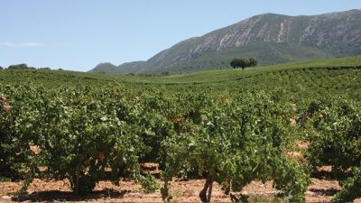 Portuguese wine tours with Four Seasons