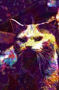 "New artwork for sale! - "" Cat Turkish Van Animal Furry Cute  by PixBreak Art "" - http://ift.tt/2tk5Tf0"