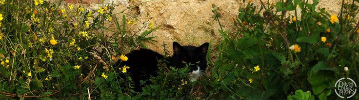 Título: Gato silvestre.     Un gato de mirada maligna justo en el centro de unos matorrales.