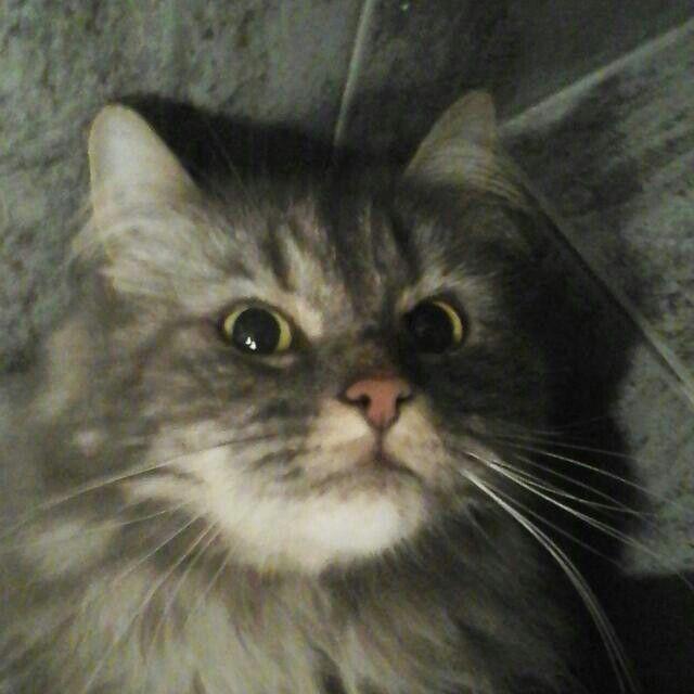 Mi gatito :)