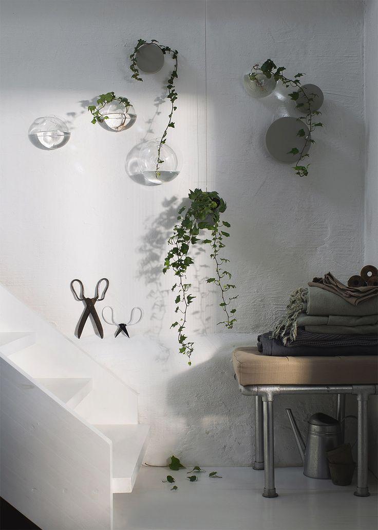 Veckans stilleben | Skir grönska | Daniella Witte