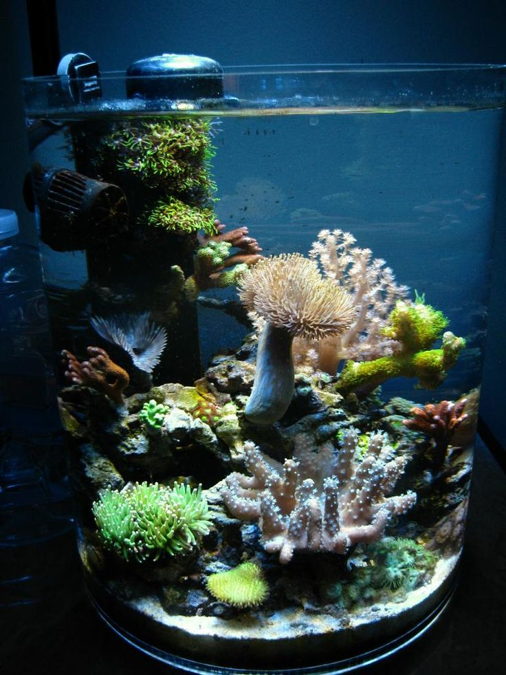 268 best ideas about nano reef aquariums on pinterest. Black Bedroom Furniture Sets. Home Design Ideas