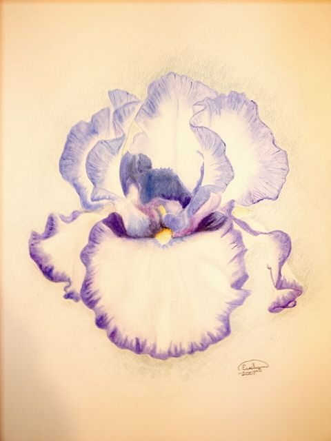 ~ Iris in watercolor pencil...missing the free days of younger years when I would spend a whole day basking in this pastime....