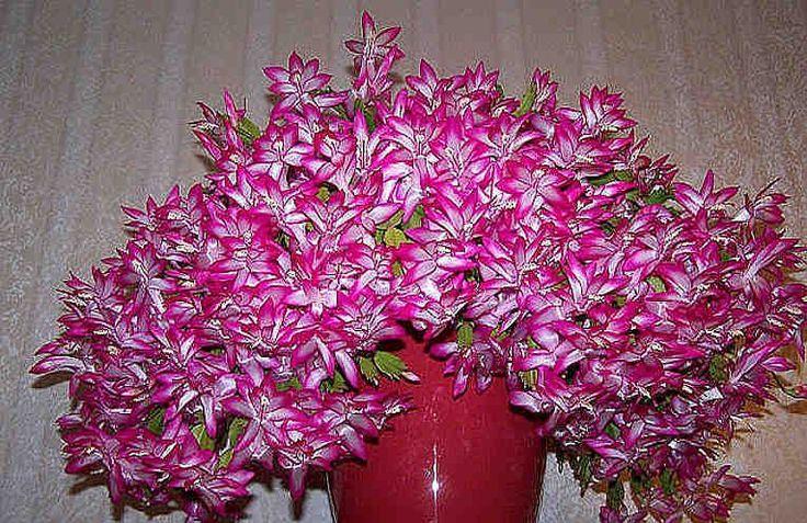 Одна чайная ложка этого средства — и ваши комнатные растения зацветут, как сумасшедшие!
