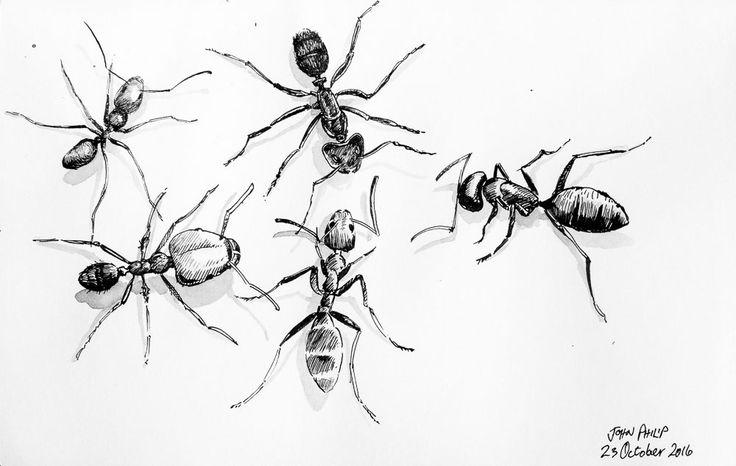 Day 23 - Ants in Ink #inktober #inktober2016 http://www.johnphilip.co.za/?p=1429