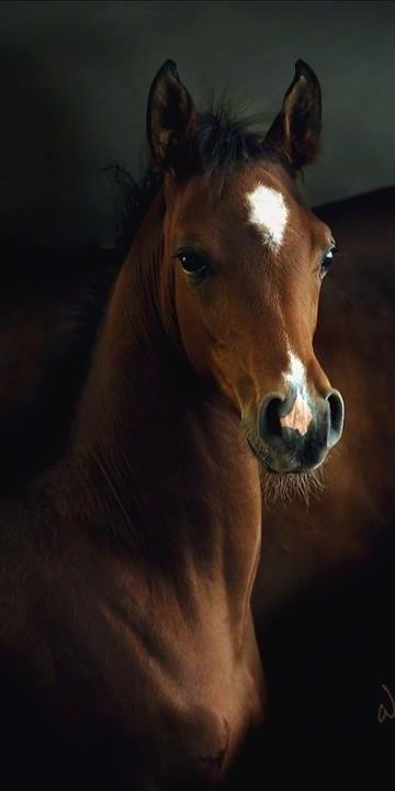 ♔ Equine