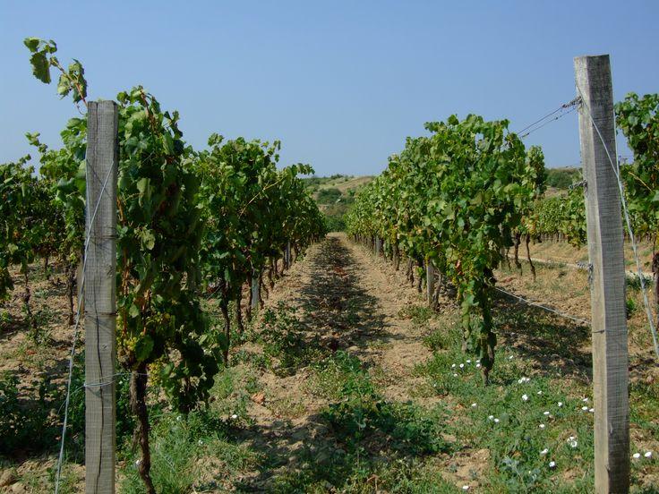 Slovakia, Tokaj wine region