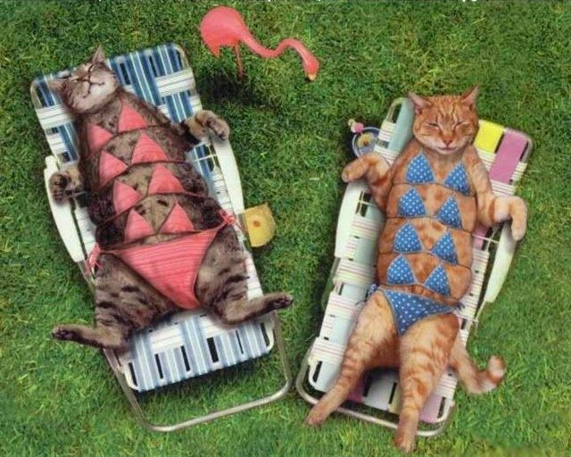 Funny Cats Sunning in the Garden in their Cat Bikinis