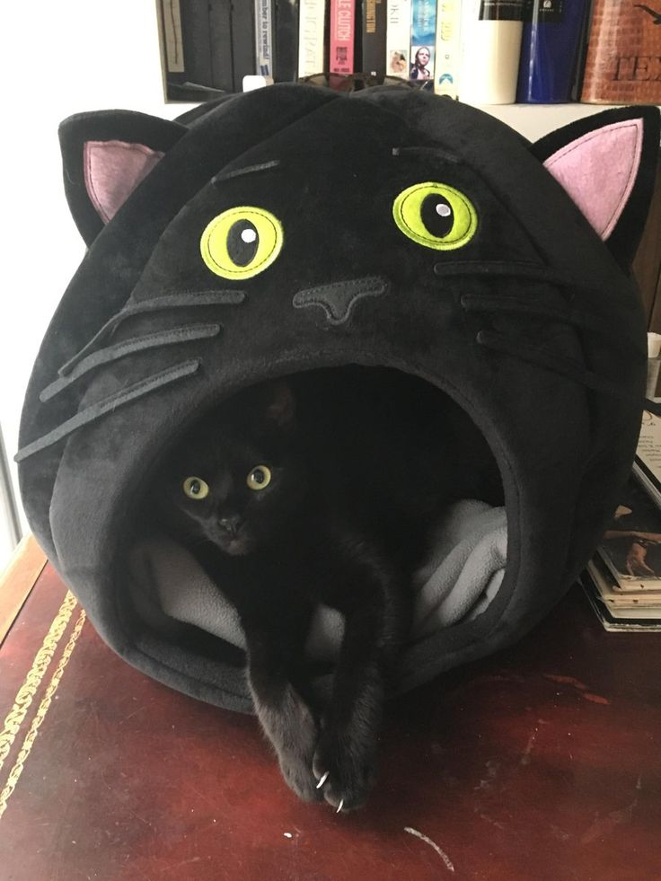My cat has a new bed.....