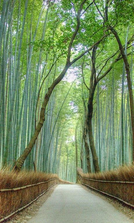 Die Besten 25 Beautiful Places In Japan Ideen Auf Pinterest Fuji Japan Destinations Und: the 50 most beautiful places in the world