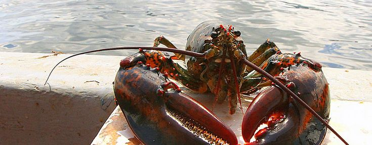 Lobster Fishing and Seal Watching