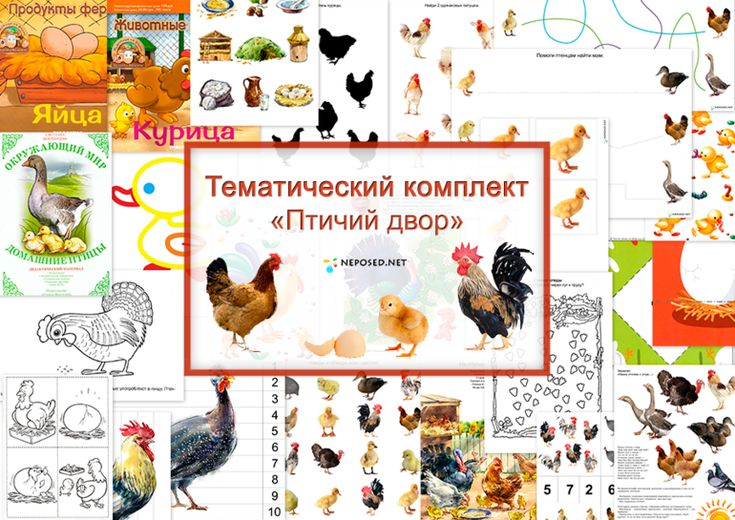 groot gratis project voor kleuters, vogels op de boerderij,  free download