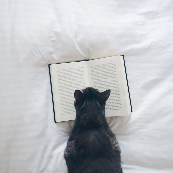 "769 aprecieri, 5 comentarii - Culture Trip Books (@culturetripbooks) pe Instagram: ""We love caturday, do you? Don't forget to share your cute kitty and book snaps with us using…"""