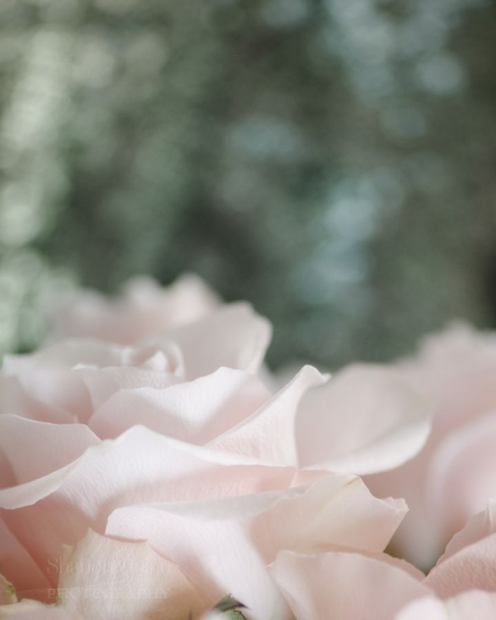 shanonquinnphotography.com Rose Petals. Blush pink roses in vase with green sequin background