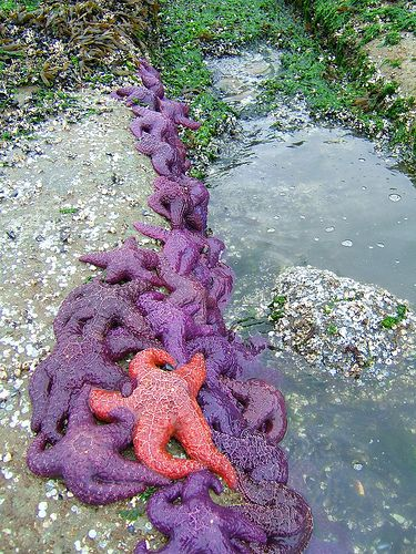 Starfish by Marlboro!, via Flickr. This is low tide at Stanley Park in Vancouver, British Columbia, Canada.