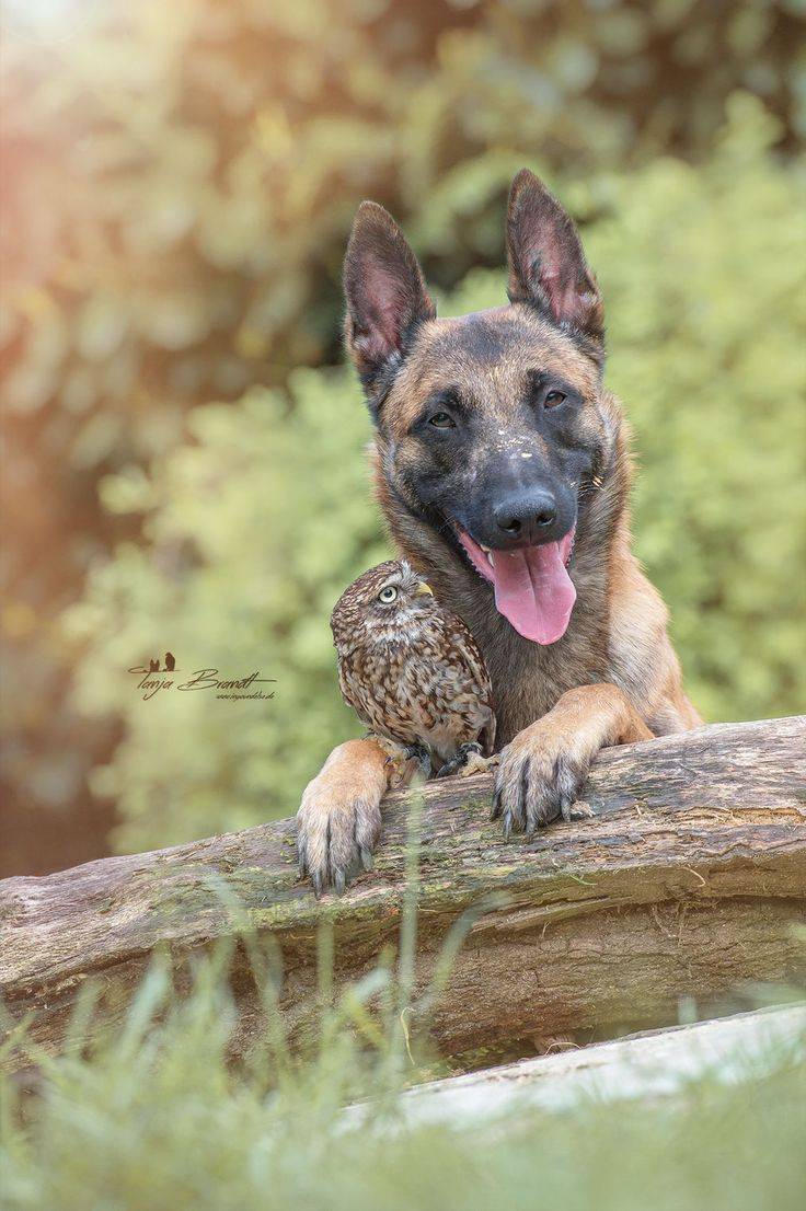 The unlikely friendship of a dog and an owl     Ingo und Poldi oder. 17 best ideas about Ingo on Pinterest   Ingo maurer  Paarshooting