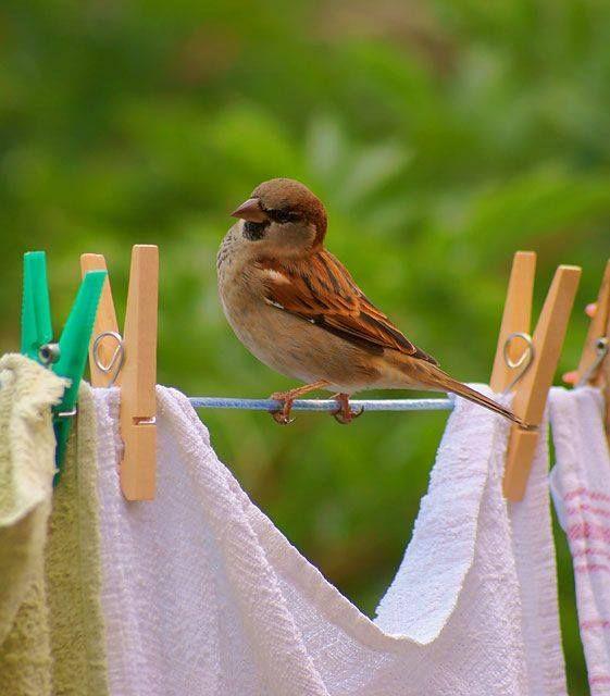 Little Baby Bird sitting on the Washing Line