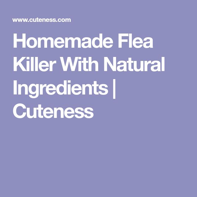 Homemade Flea Killer With Natural Ingredients | Cuteness