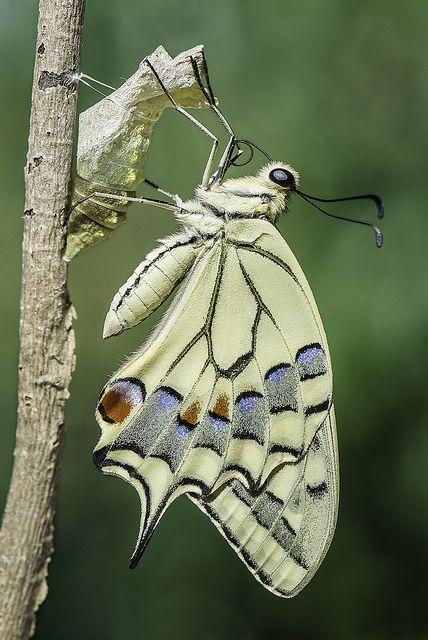 """seasonalwonderment: """"""""Butterfly"""" ~ Photography by Davide Dèdè Lopresti on Flickr. """""""