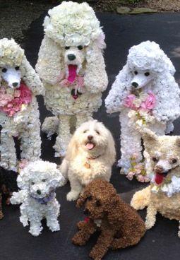 Flower Poodles