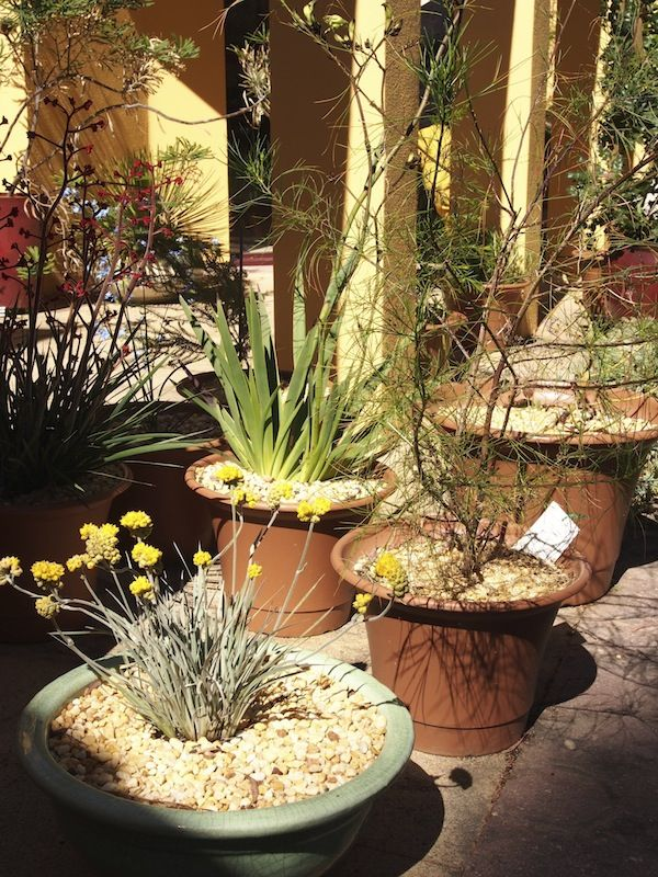 Potted native plants that need special growing conditions