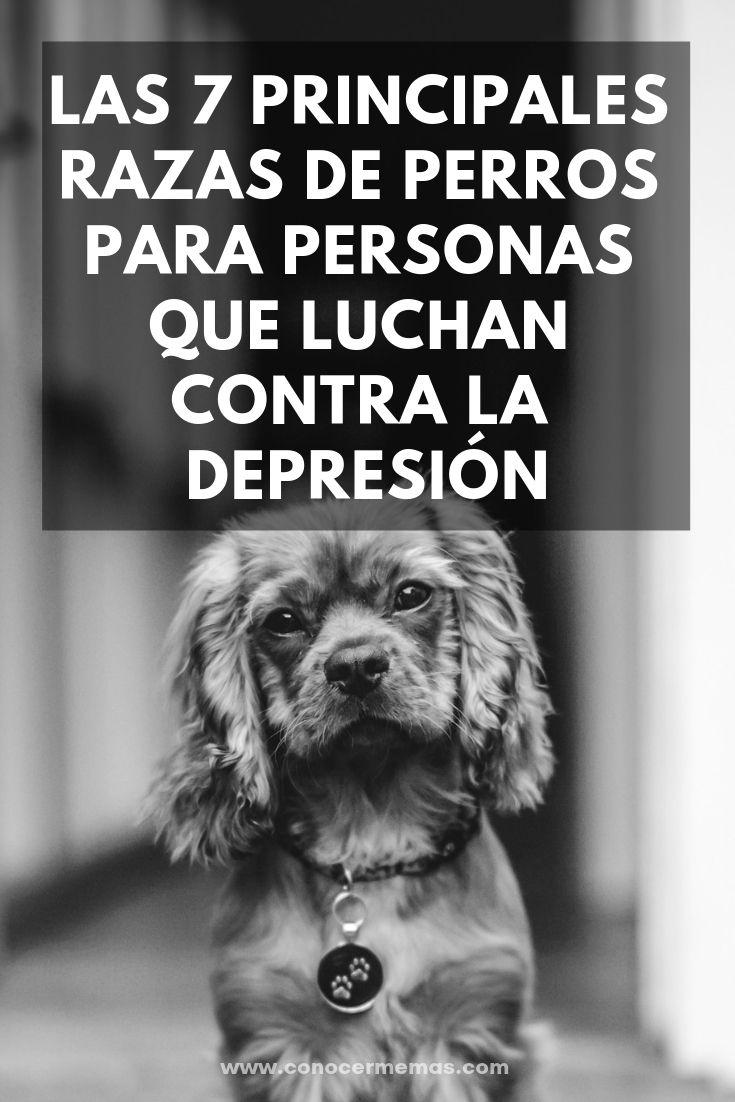Las 7 principales razas de perros para personas que luchan contra la depresión …