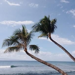 Blue waves, clear skies, and swaying palm trees are all you need in #Maui. Photo courtesy of travelholics on Instagram.