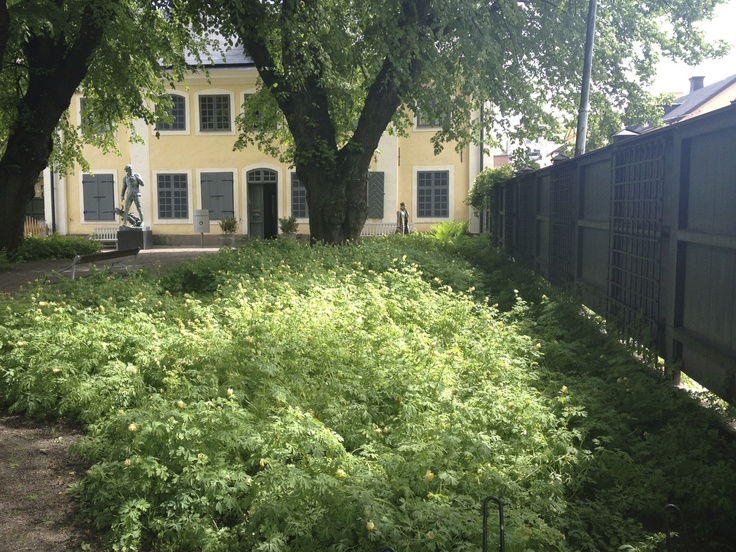 Carl Linneaus house in Uppsala