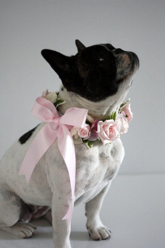 French Bulldog flower collar