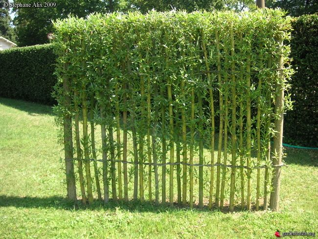 17 best ideas about haie v g tale on pinterest plante haie haies and am nagement paysager des - Cloture de jardin rustique ...