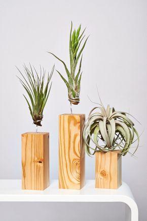 Die besten 25 luftpflanzen ideen auf pinterest klimaanlagenanzeige sukkulenten arten und - Tillandsien deko ...
