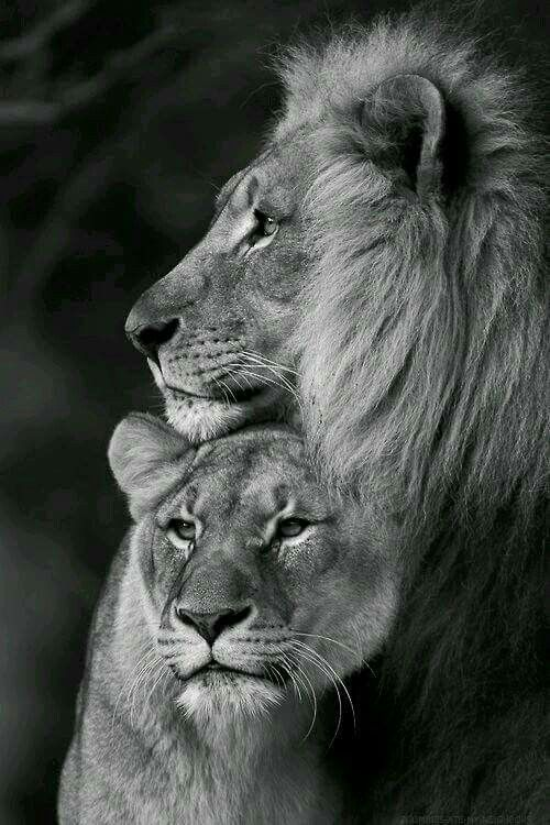 Magnifica foto...