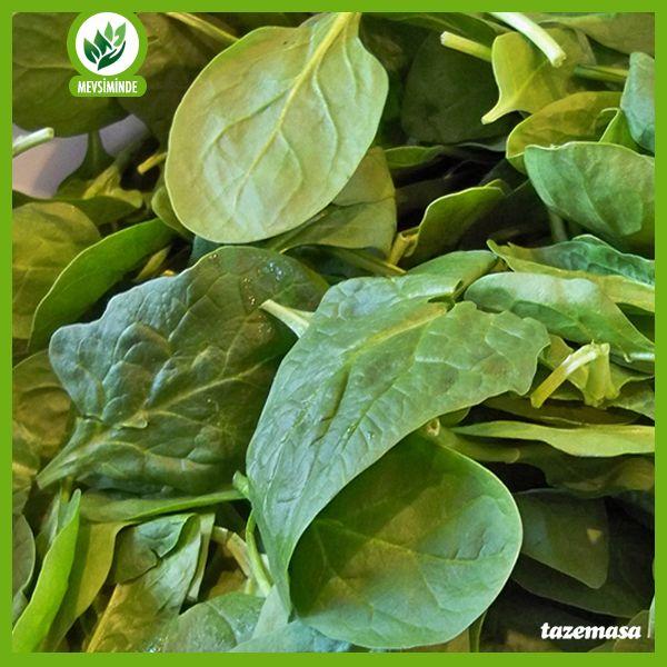 İçerdiği B ve C vitamini ile ıspanağın büyüme ve gelişmeye faydalı olduğunu biliyor muydunuz?   Sepete at; http://www.tazemasa.com/Ispanak-Polatli-kg,PR-74.html