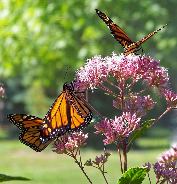 Hola amigas y amigos de Farmachueca. Tenemos para vosotros un nuevo artículo en nuestro blog. Ya hablamos acerca de qué hacer si tengo #alergiaalpolen. Hoy queremos hablaros de los tipos de alergia al polen. Seguro que os gustará. http://farmachueca.com/blog/tipos-de-alergia-al-polen-mas-comunes/