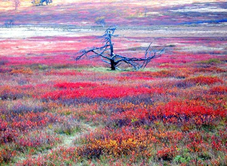 Big Meadows On The Skyline Drive Virginia Usa Travel