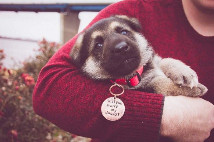Awww! This puppy proposal is so adorable, I can't even. This is way to cute!
