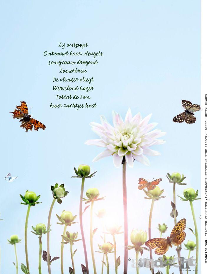 De vlinder vliegt.   Dichtbij de natuur!      Bron: Carolien Venhuizen (Ambassadeur Stichting Pink ribbon). Beeld: Getty Images   Aandachtmagazine.nl