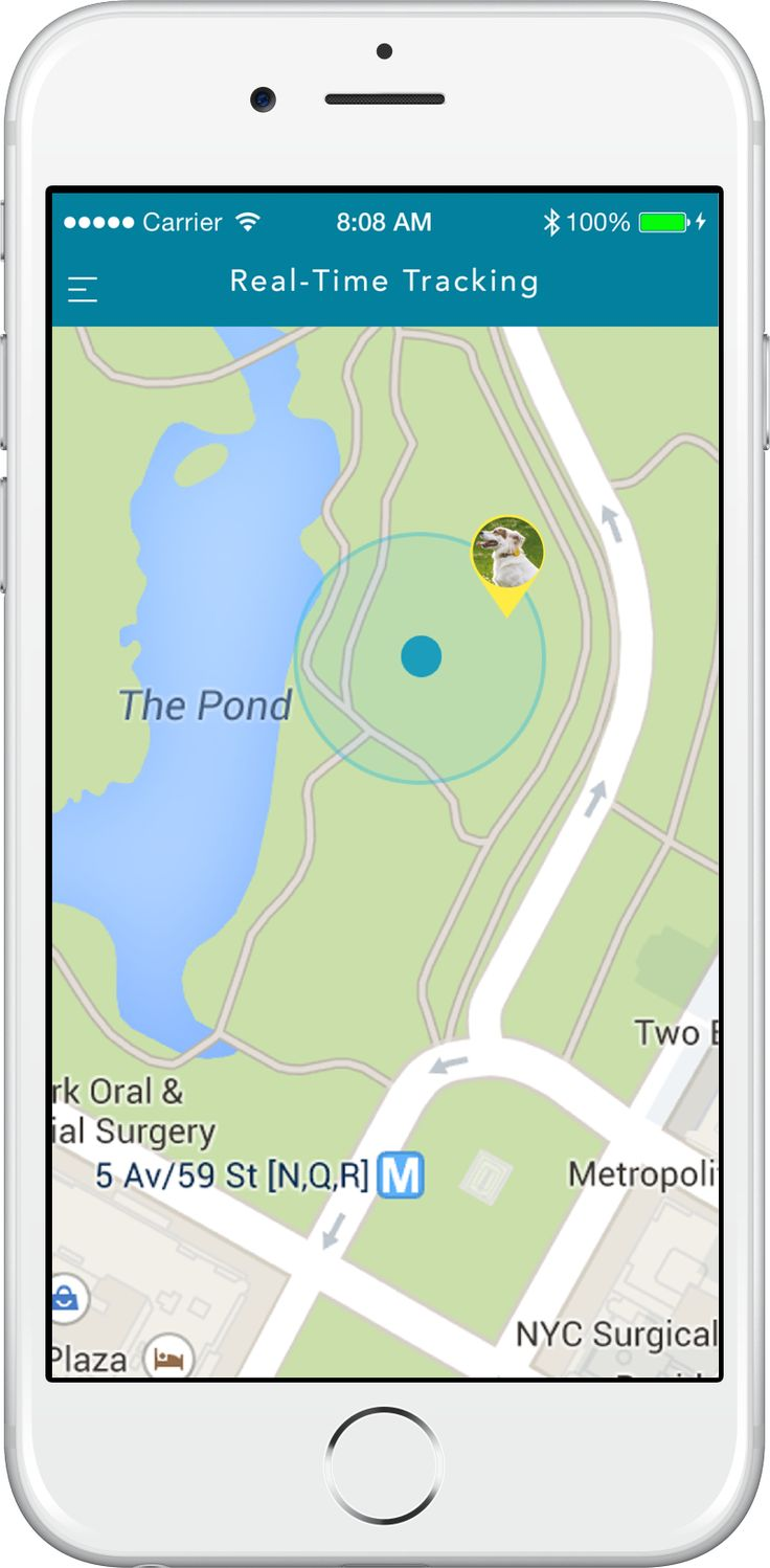 Findster Duo Is The First Gps Pet Tracker Without Monthly Fees A Real Time Pet Locator And A Pet Activity Tracker That Works Everywhere Wo Sim Card
