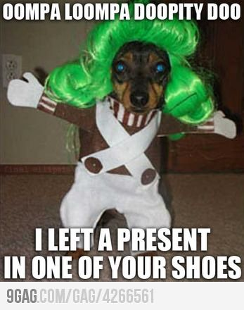 : Make Me Laughing, Halloween Costumes, Chocolates Factories, Golden Ticket, Oompa Loompa, Poor Dogs, Funny Animal Meme, So Funny, Can'T Stop Laughing