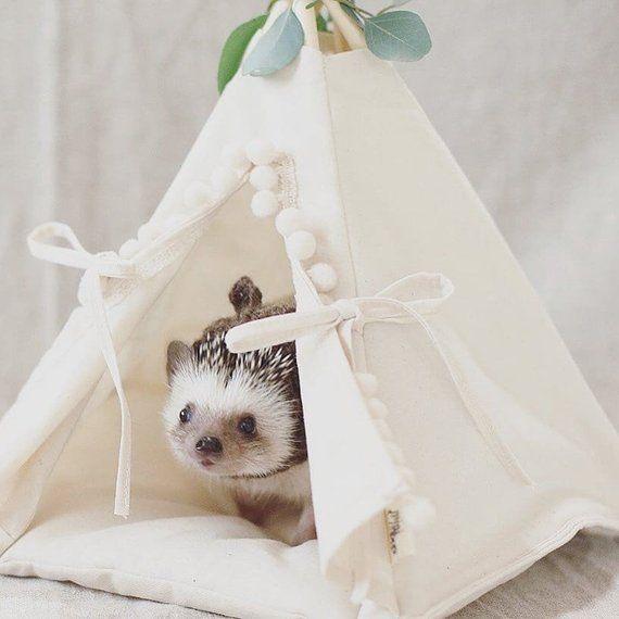 Hedgehog Bed Hedgehog House Hedgehog Teepee With Pad Small Pet