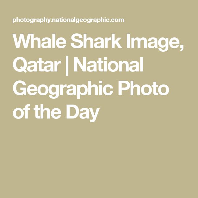 Whale Shark Image, Qatar | National Geographic Photo of the Day