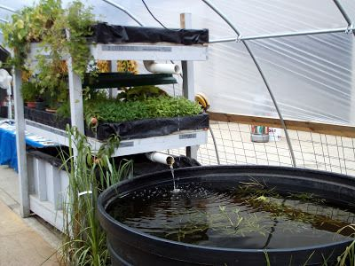 28 best greenhouse images on pinterest hydroponics aquaponics aquaponics growbed and tank setup at 2008 wisconsin state fair greenhouse ideasaquaponics greenhousehydroponicsaquaponics fishfish farmingtilapia sciox Images