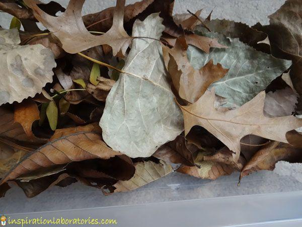 Leaf Man {Virtual Book Club for Kids} | Inspiration LaboratoriesInspiration Laboratories